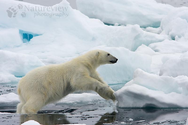 20080701_spitsbergen_pack_558