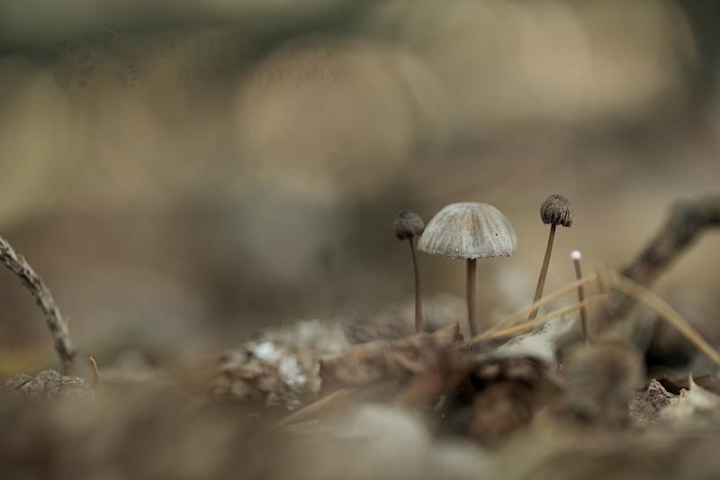 2012-09-22_dwingelderveld_14320
