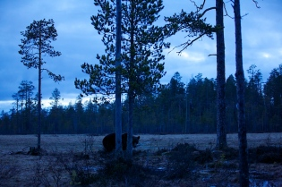 Brown Bear, an hour after sunset, made with 70mm lens...