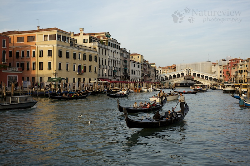 Canal Grande with Rialto bridge
