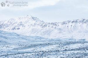 Arctic landscape in winter