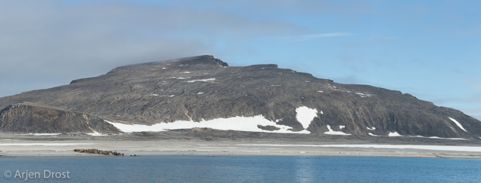 Walrus; Walrus; Odobenus rosmarus