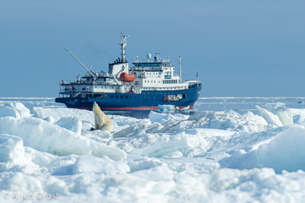 IJsbeer en schip; Polar Bear and ship; Ursus maritimus