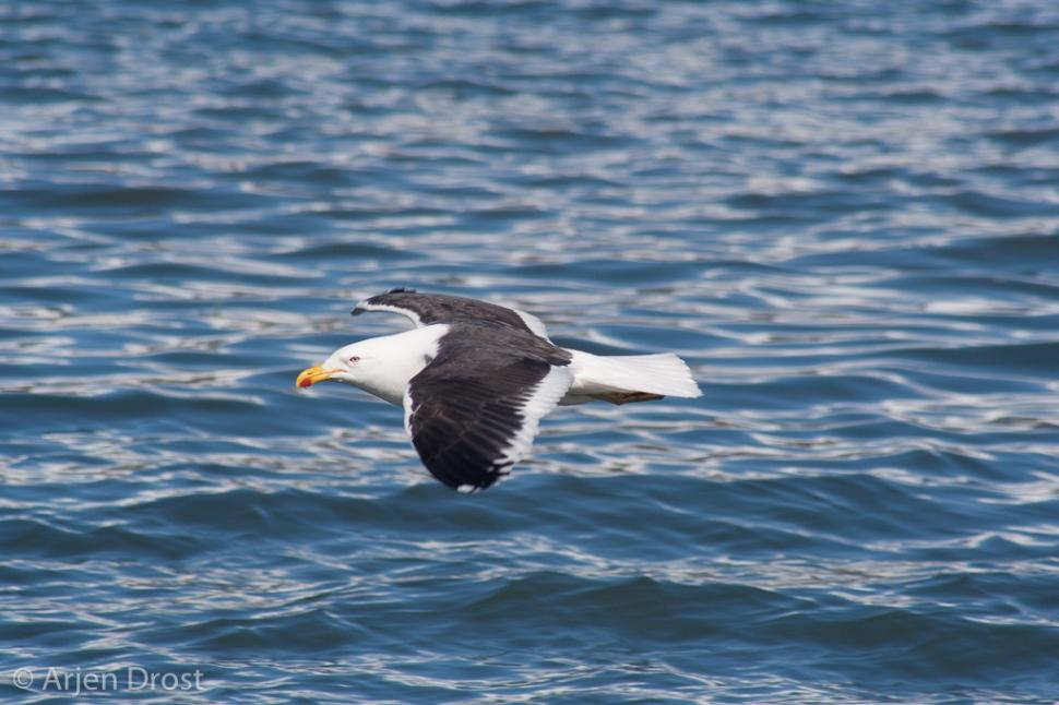 05-12-22_whalers_bay_008.jpg
